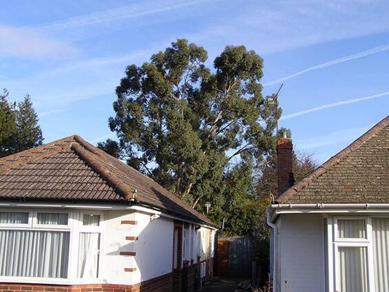 Image 16 - Eucalyptus Fell 1