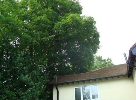 Image 26 - Reduction of neighbouring tree away from property 1