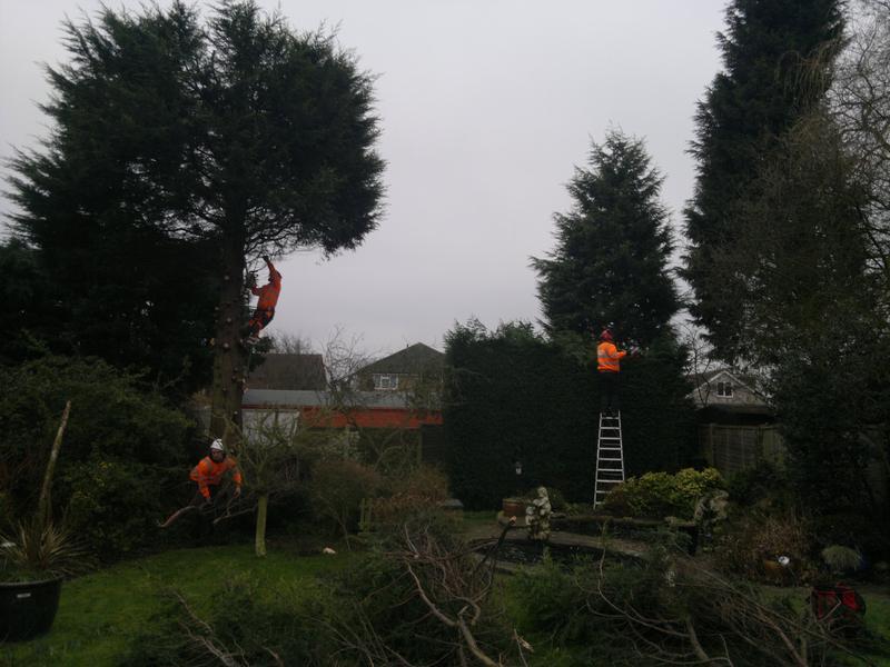 Image 14 - tree surgery