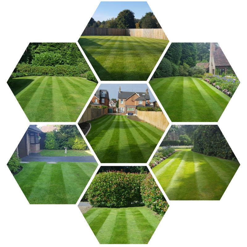 Image 1 - Lawns treated and maintained by Premier Lawns