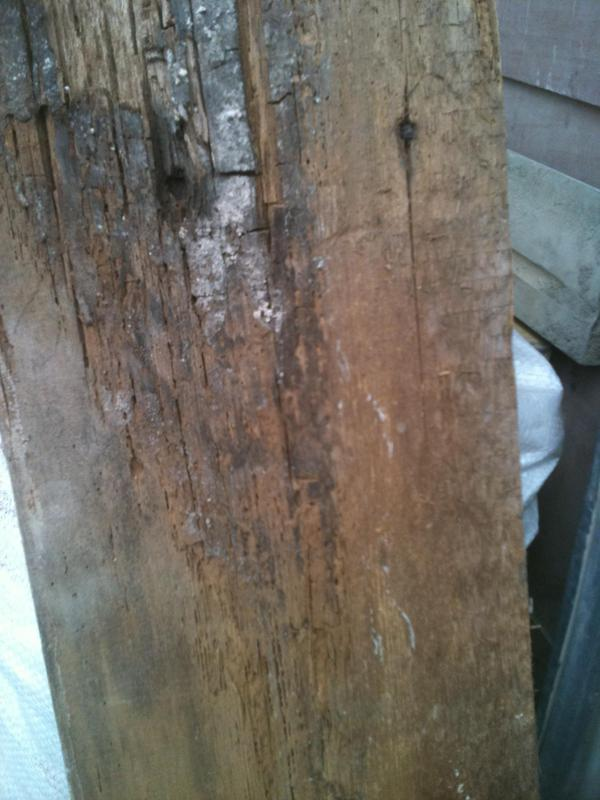 Image 1 - Dry rot