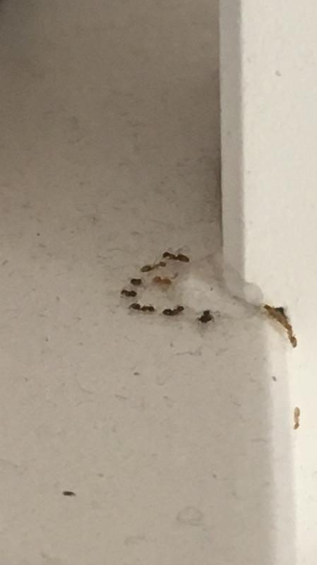 Image 17 - Ant control in east London