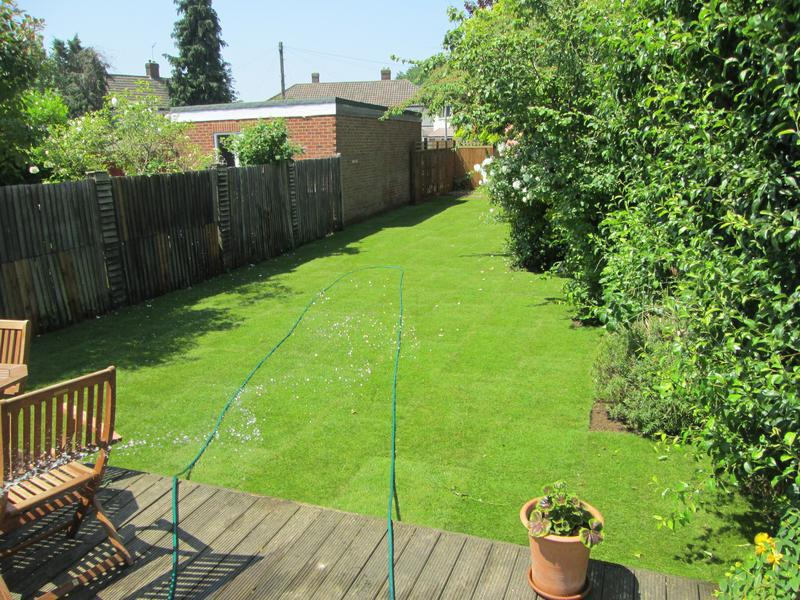 Image 88 - New turf lawn