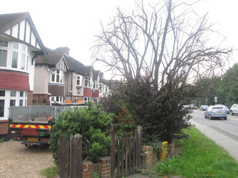 Image 83 - Before tree removel