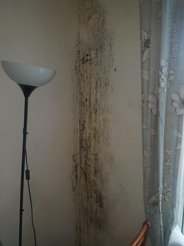 Image 43 - Investigating damp.