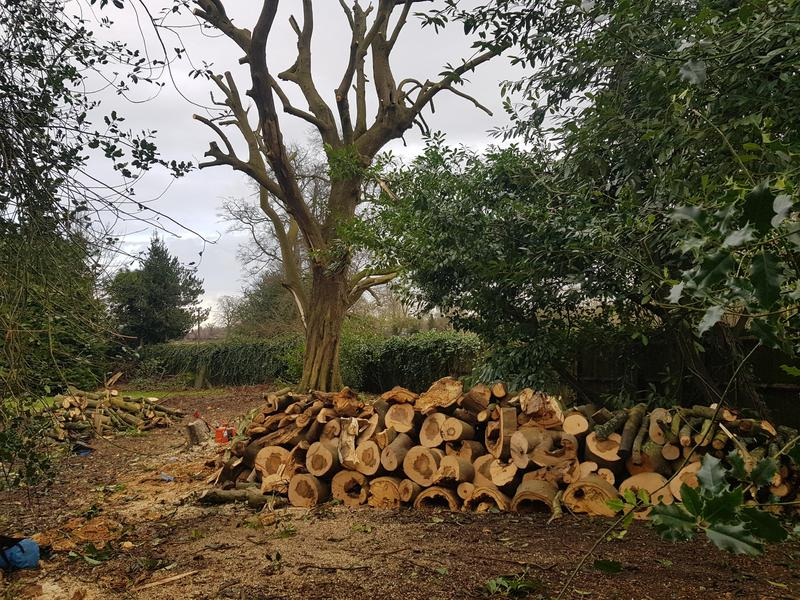 Image 24 - Tree services medway