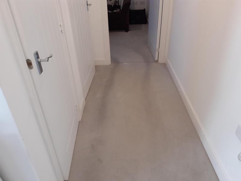 Image 7 - Carpet cleaning before
