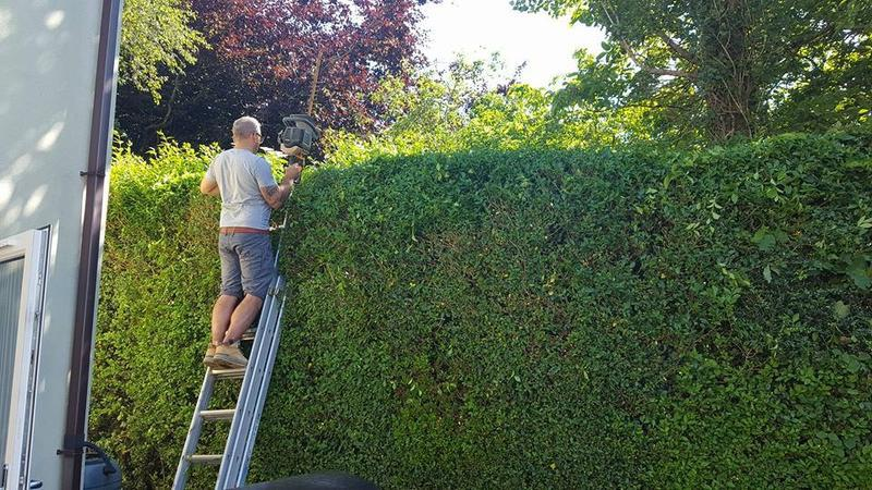 Image 29 - Hedge cutting