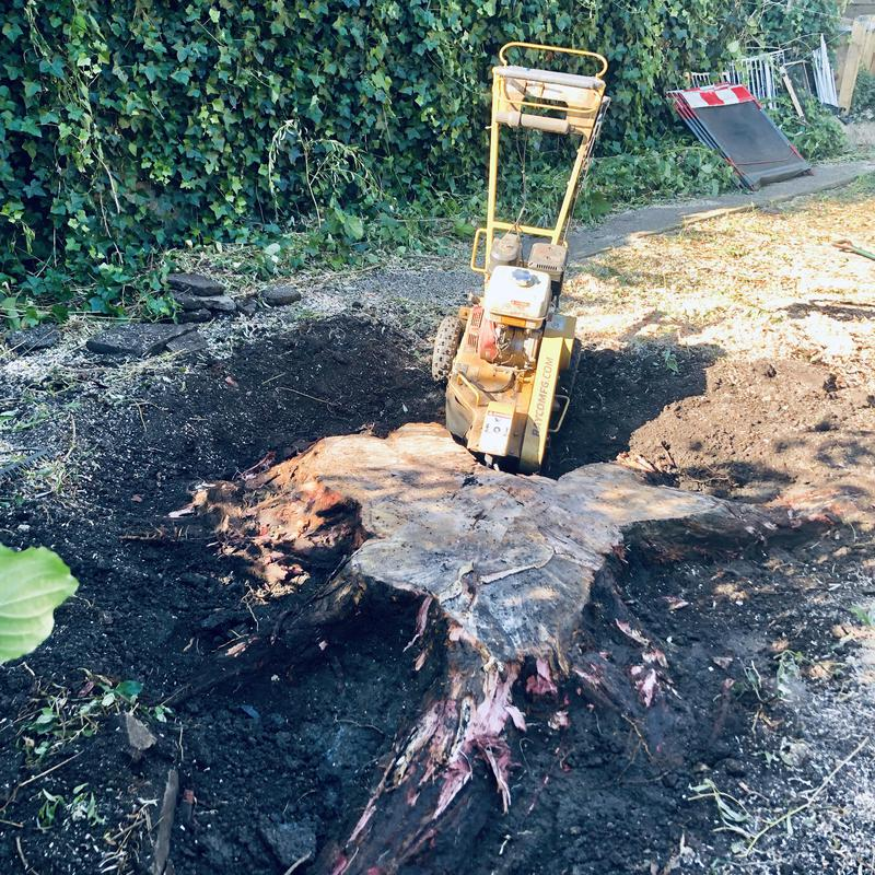 Image 9 - Stump grinding
