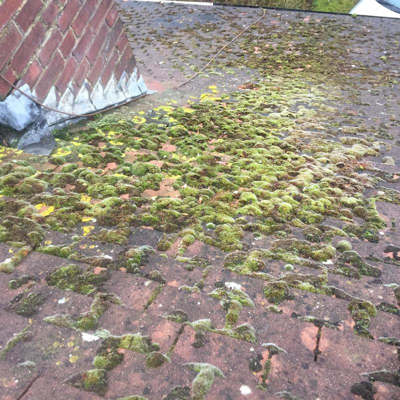 Image 4 - before / removing moss