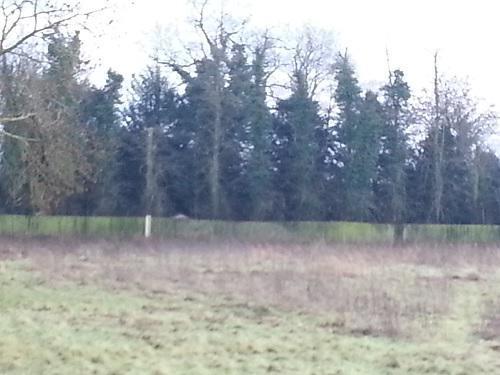 Image 8 - Large 6' feather edge fence bfore