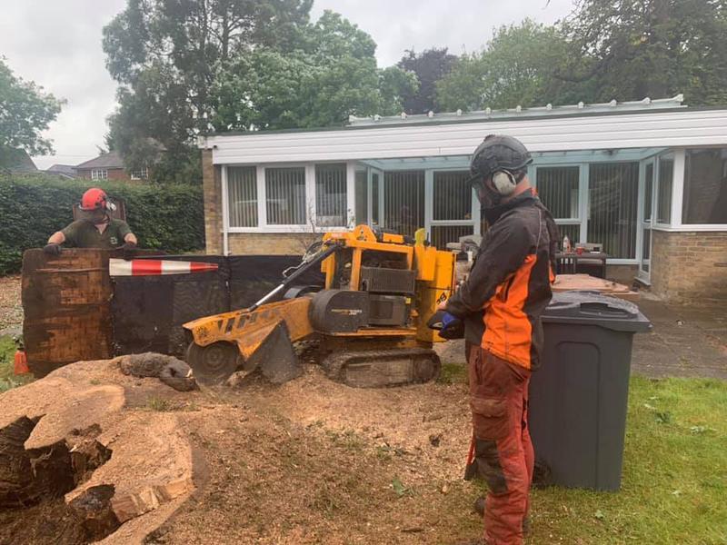 Image 5 - Stump grinding