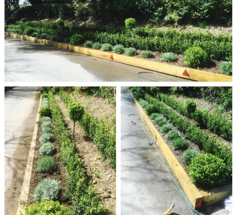Image 16 - 31- Cleared bank full of ivy , sleeper retaining wall with small ever greens