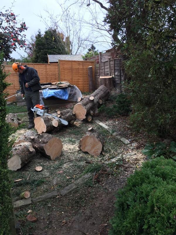 Image 20 - The main stem from the large conifer was sectioned to avoid damage. In Rushden.