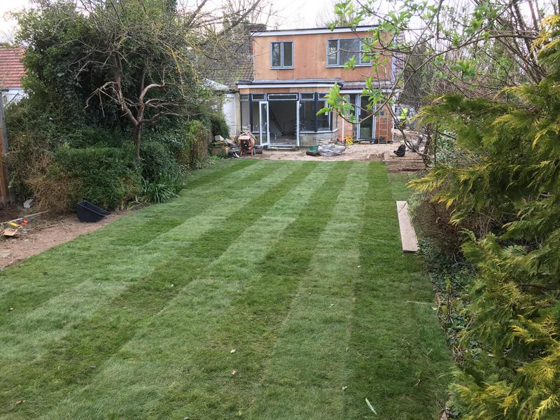 Image 194 - New lawn