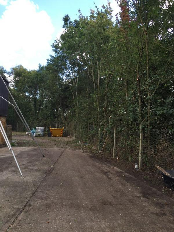 Image 16 - All over hanging branches removed to boundary at a commercial site in Wollaston, Wellingborough.