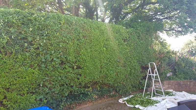 Image 27 - Hedge cutting