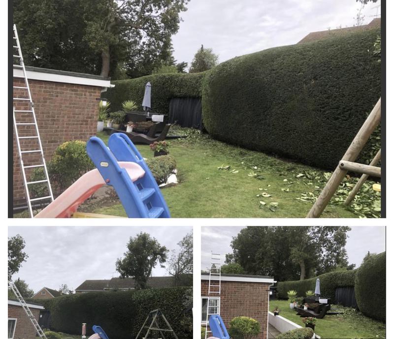 Image 35 - 20- Hedge cutting