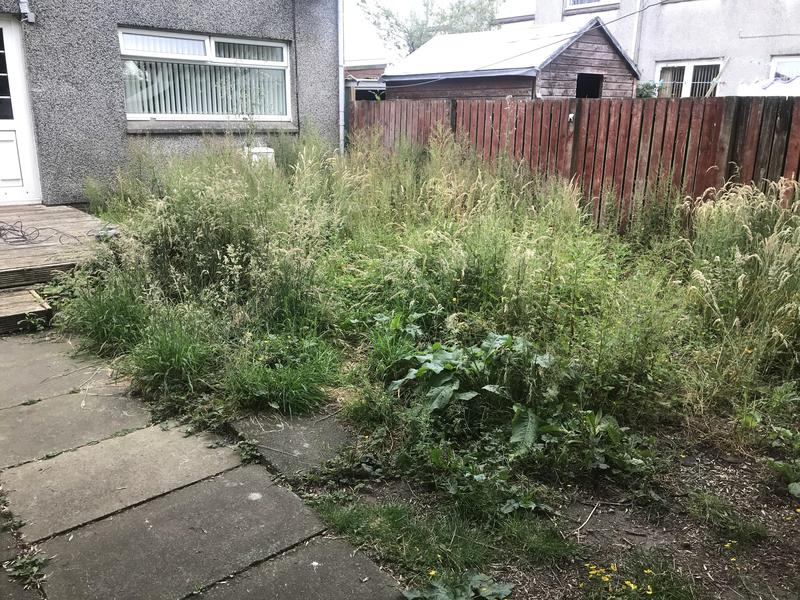 Image 67 - Garden tidy up before