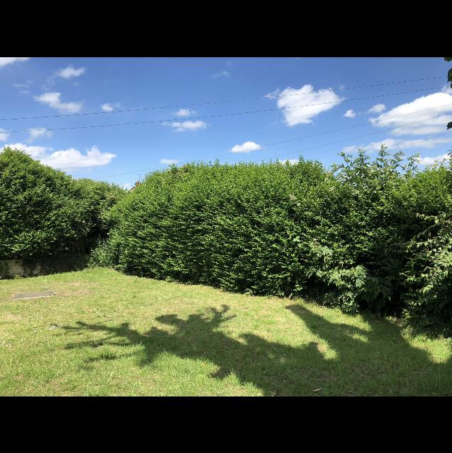 Image 8 - Before: hedge had become unmanageable for the customer
