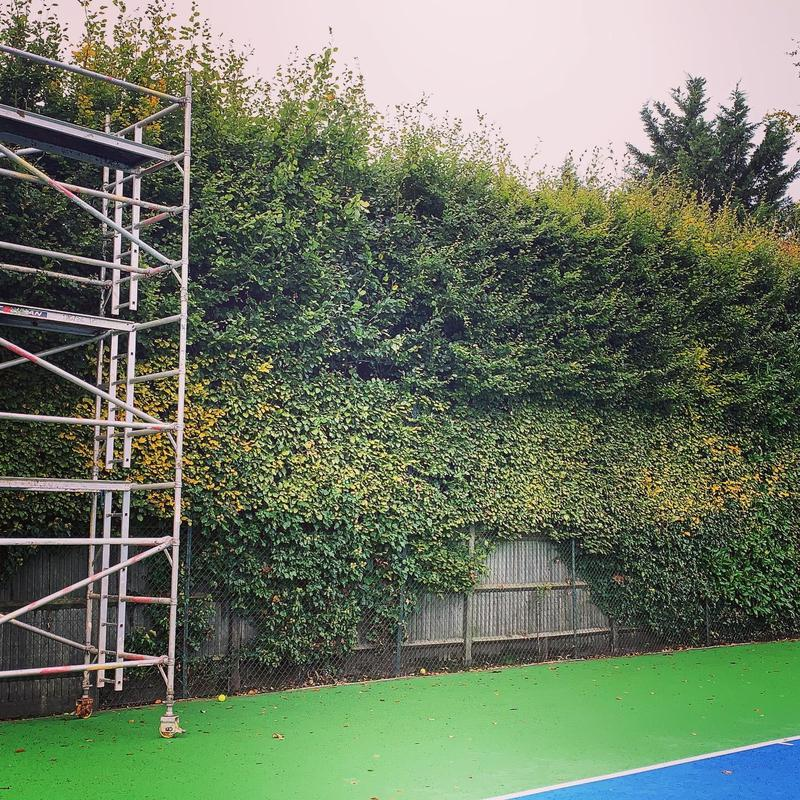 Image 13 - large hedge trim