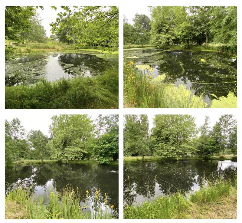 Image 9 - 39- Pond maintenance- Before and after