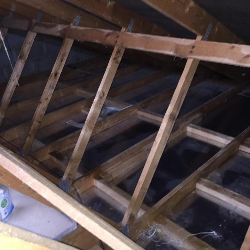 Image 4 - Decontamination of a previously infested loft