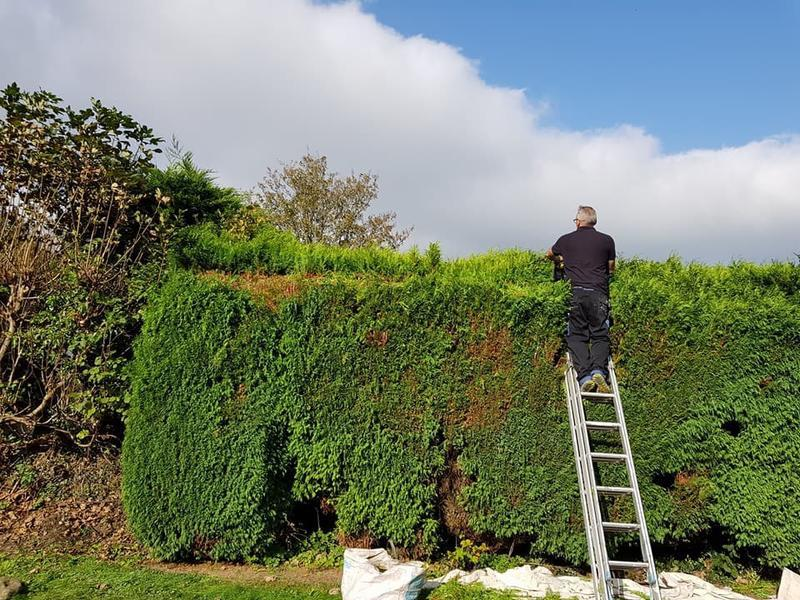 Image 59 - Hedge cutting in progress!