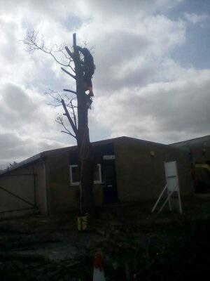 Image 19 - Large sycamore in industrial estate, during