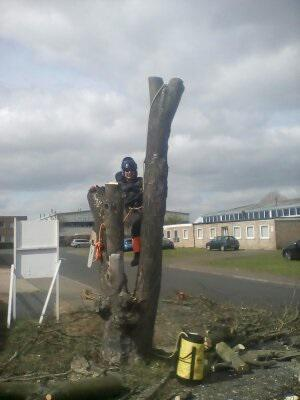 Image 20 - Large sycamore in industrial estate, during
