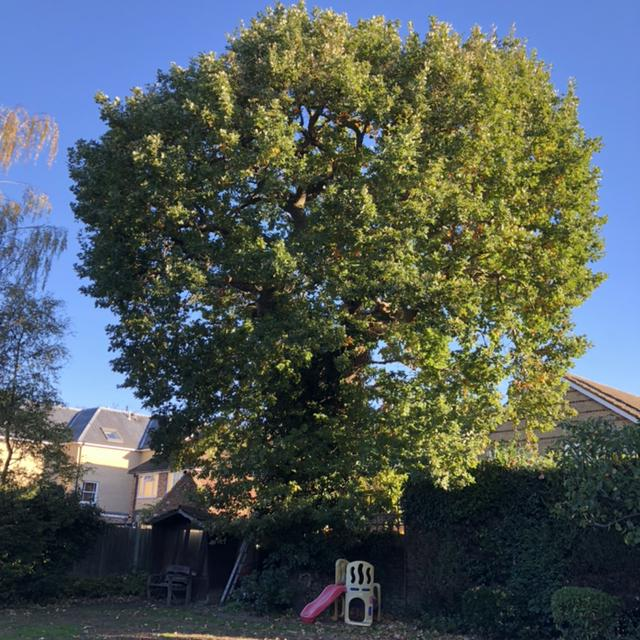 Image 11 - Before oak reduction