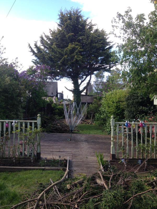 Image 52 - Tree work before