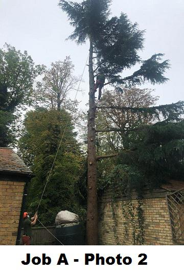 Image 8 - During Cedar removal