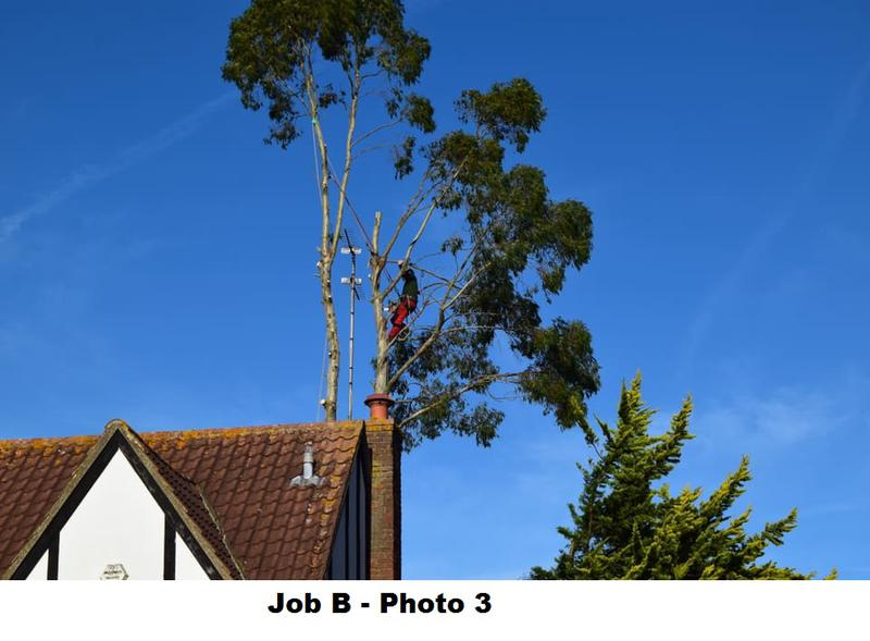 Image 16 - During large Eucalyptus removal.