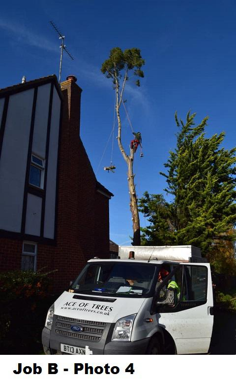 Image 17 - During large Eucalyptus removal.