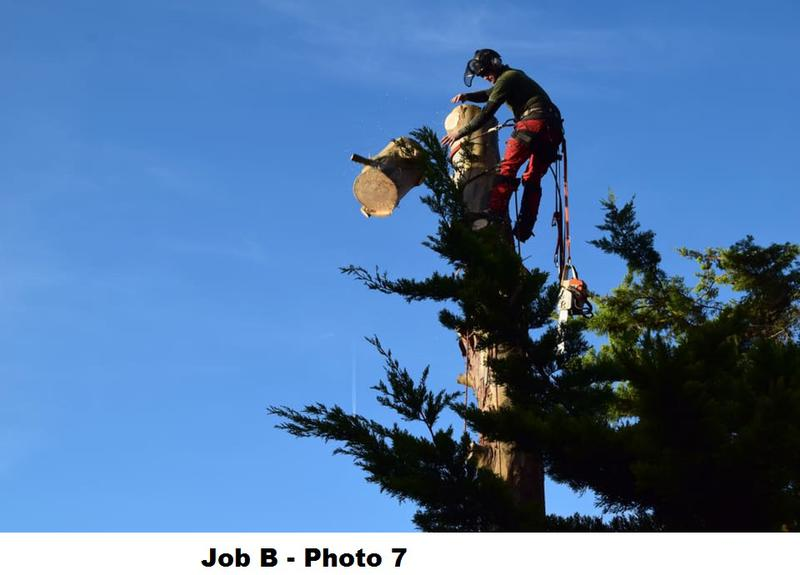 Image 20 - During large Eucalyptus removal.