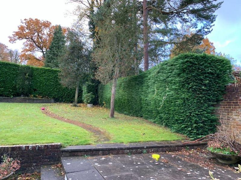 Image 27 - Hedge cutting.