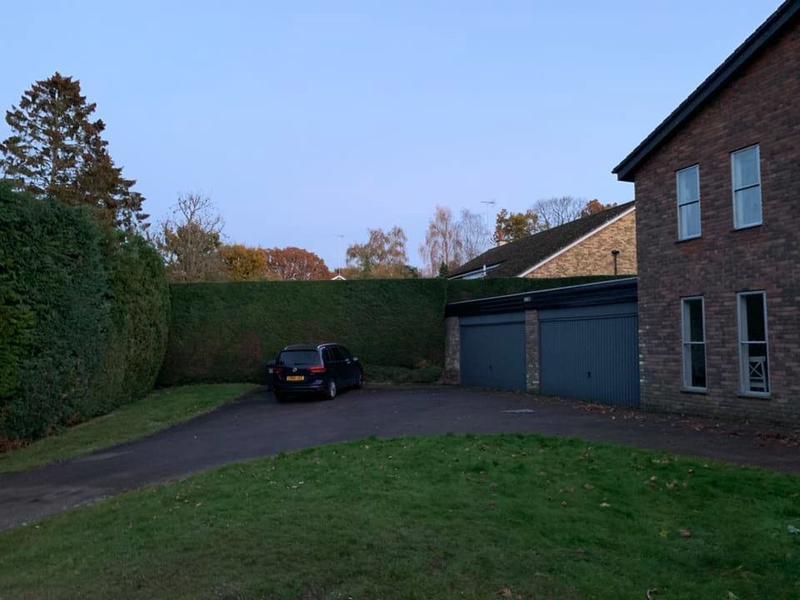Image 28 - Finished hedge cutting.