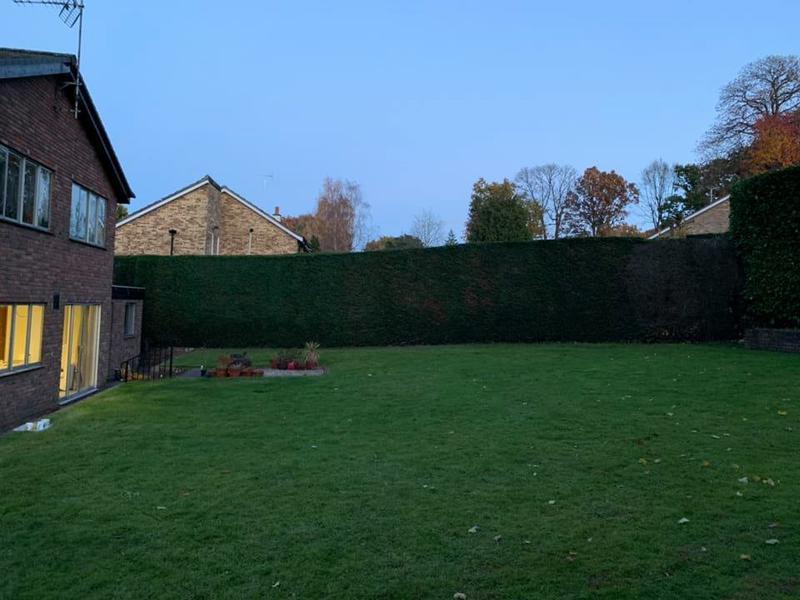 Image 29 - Finished hedge cutting.