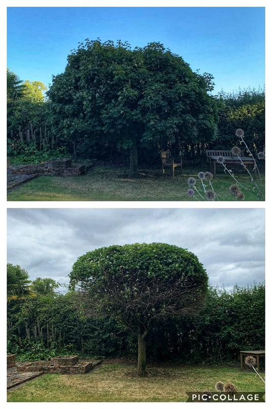 Image 1 - Acer reduction.
