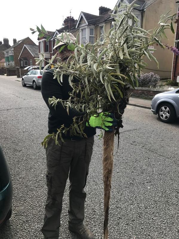 Image 18 - Plant removed from downpipe