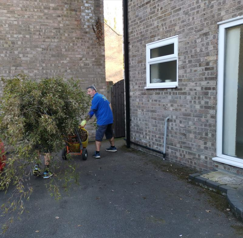 Image 5 - Moving some very large Bamboo plants!