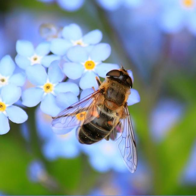 The Buzz on: Types of Bees