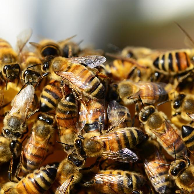 The Buzz On: Bees' Nests