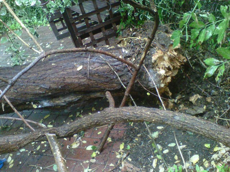 Image 21 - tree blown over we removed waste