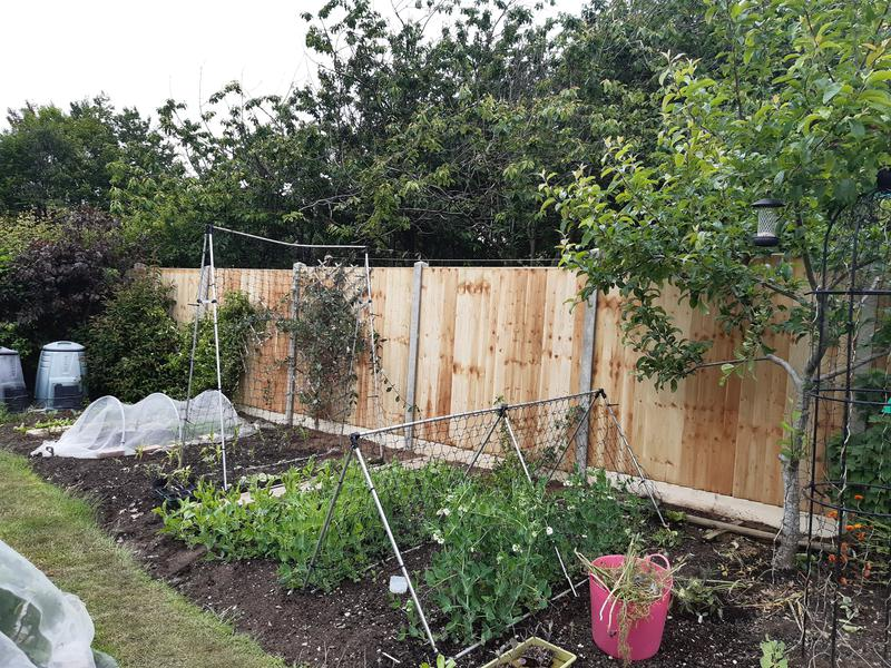 Image 136 - Closeboard fencing on concrete posts