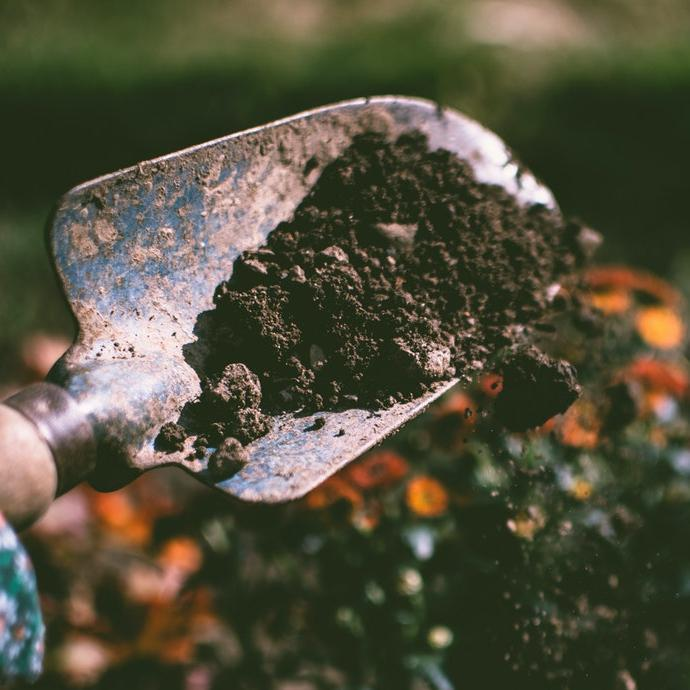 Give Your Garden A Boost With Coffee Grounds
