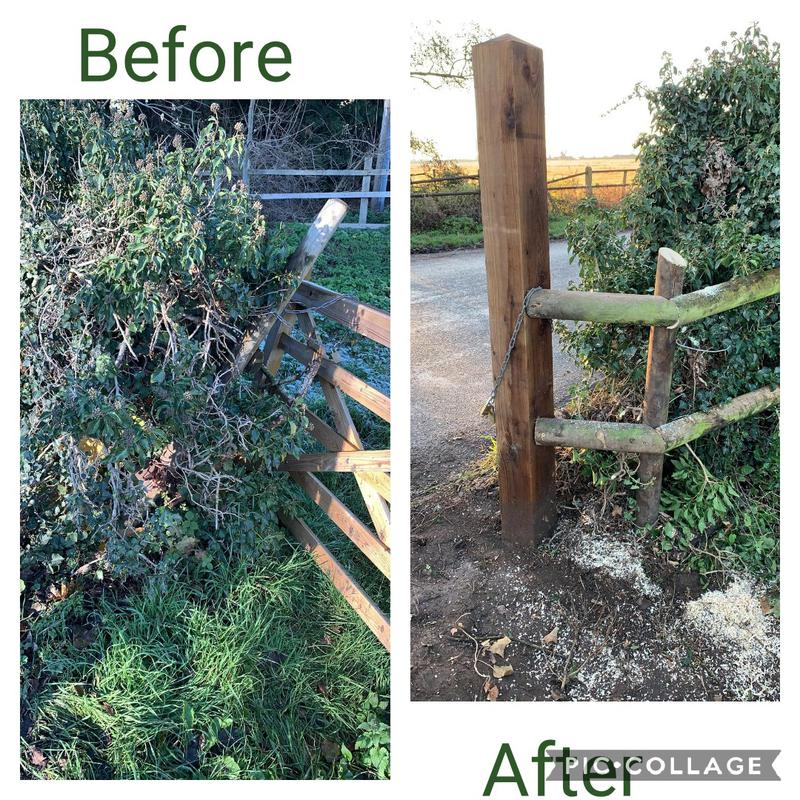 Image 1 - Hedge taken out to place a fence post to have a secure open and closing gate