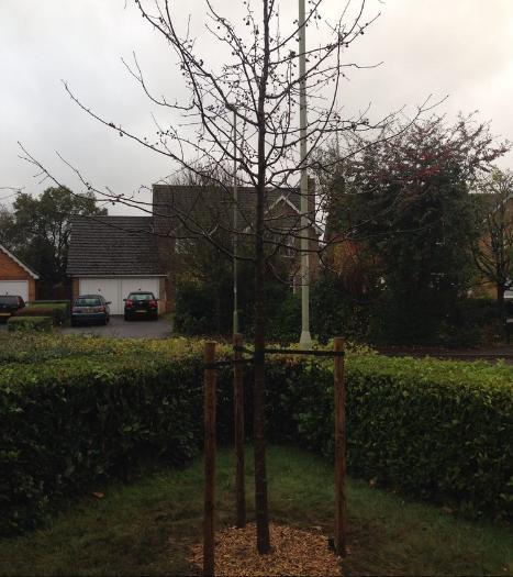 Image 9 - Planting 2