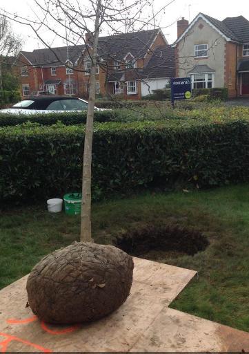 Image 8 - Planting 1